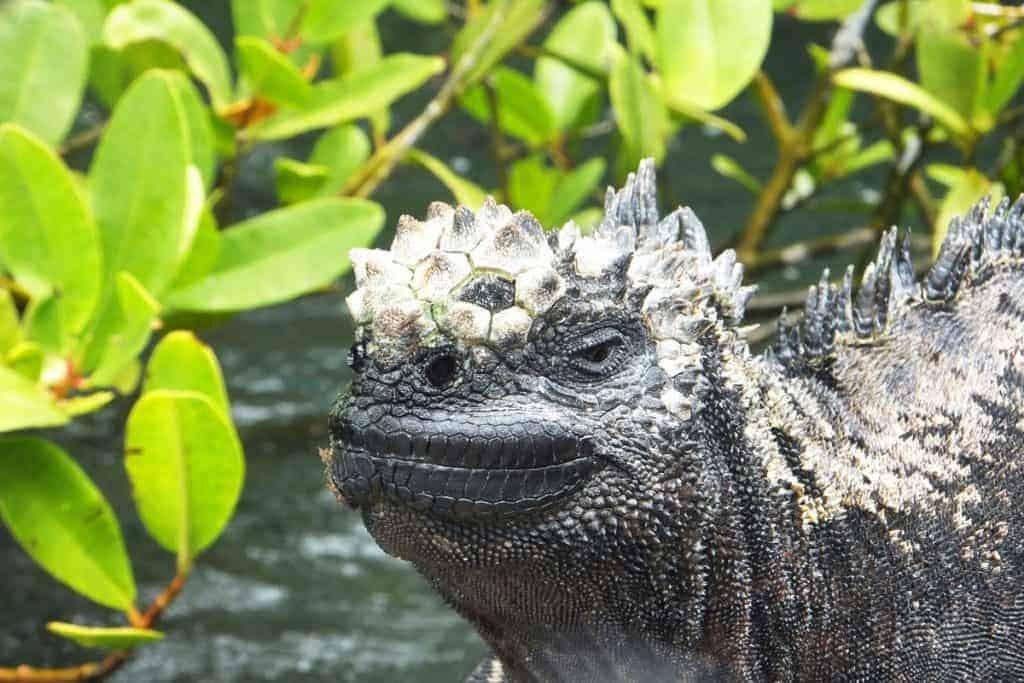 The bizarre creatures of Galapagos, Ecuador.