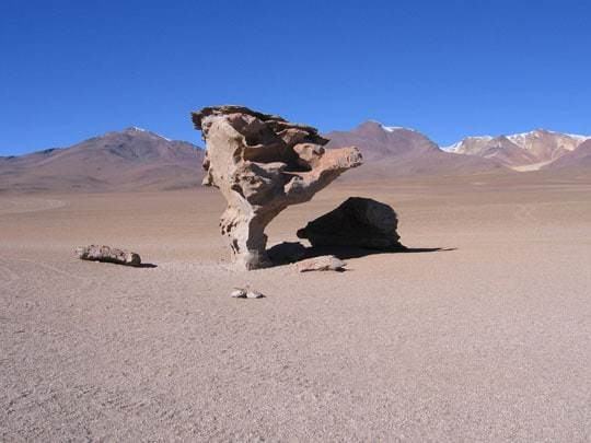 A Rock That Looks Like A Tree In The Desert