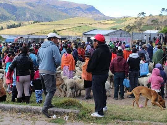 A Big Crowd at the Guantualo Animal Market