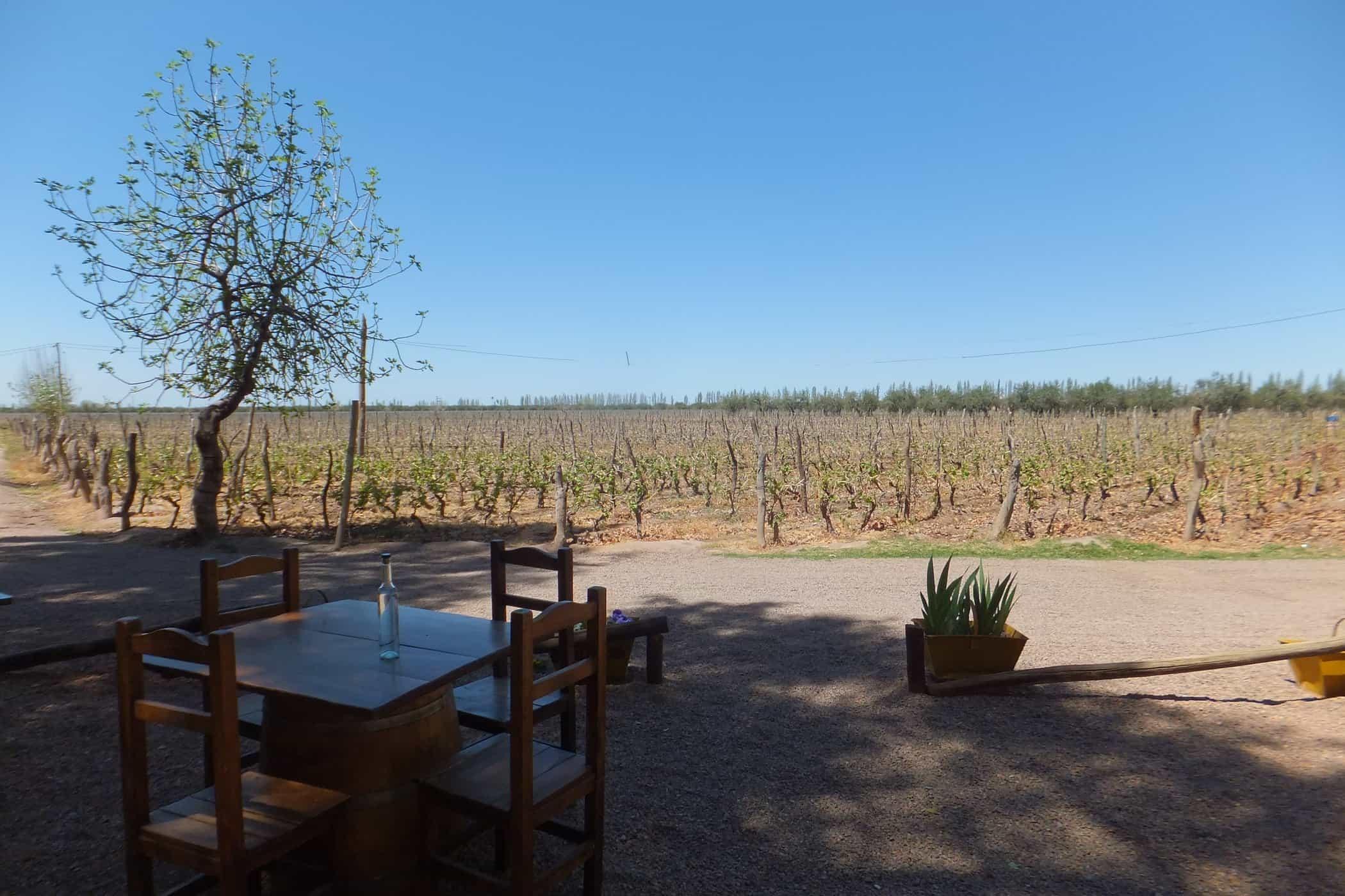 Vineyards at a family-run bodega, Mendoza.
