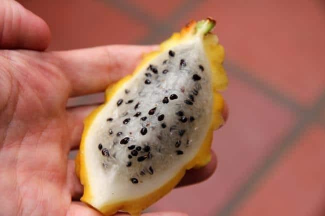 Yellow dragon fruit