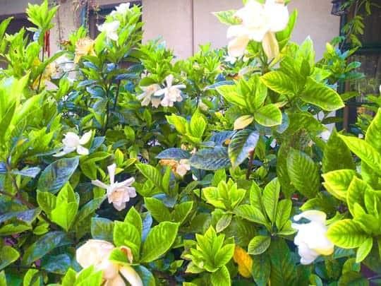 Plants in El Bosque