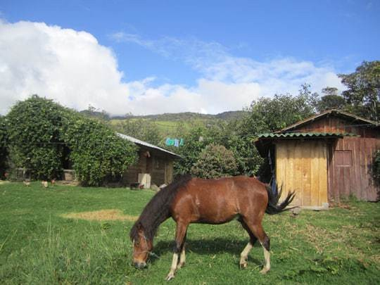 EDIT - Ned and Patricia's home and guesthouse, and Juguete their horse