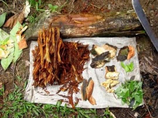 Pieces of the Chakruna Plant, Ready to Brew Into Ayahuasca