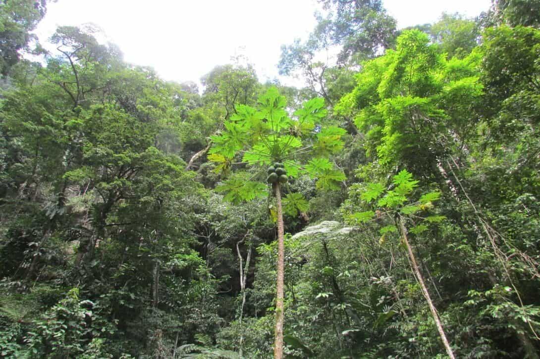 Tarapoto jungle, Peru