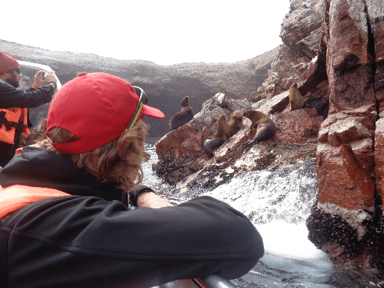 A Couple Of Travellers Take Photos of Sea Lions on The Ballestas Islands