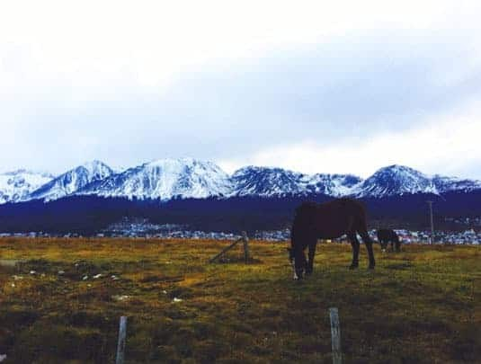 Horese Grazing With Snowy Mountains in the Background in Ushuaia