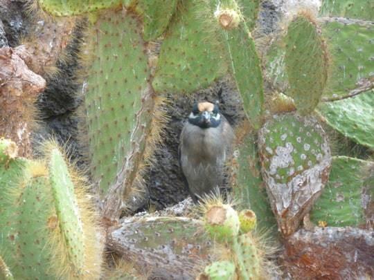 A Bird Sits On A Cactus