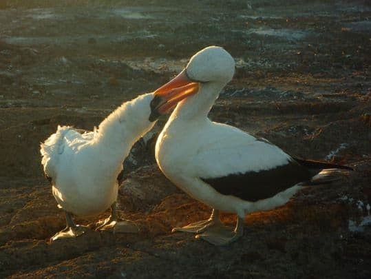 A Sea Bird Feeds Its Young