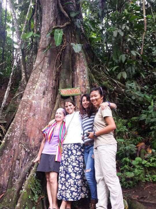 5 A Tolon-Pele tree