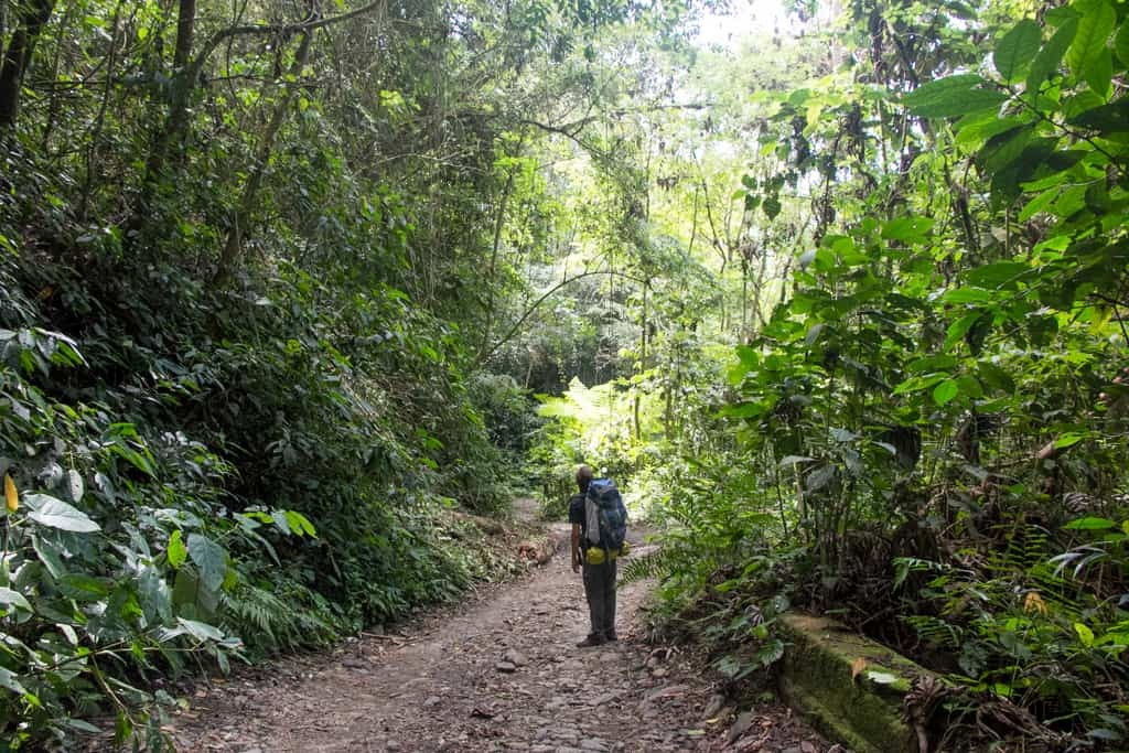 Man hiking in cloud forest, Colombia