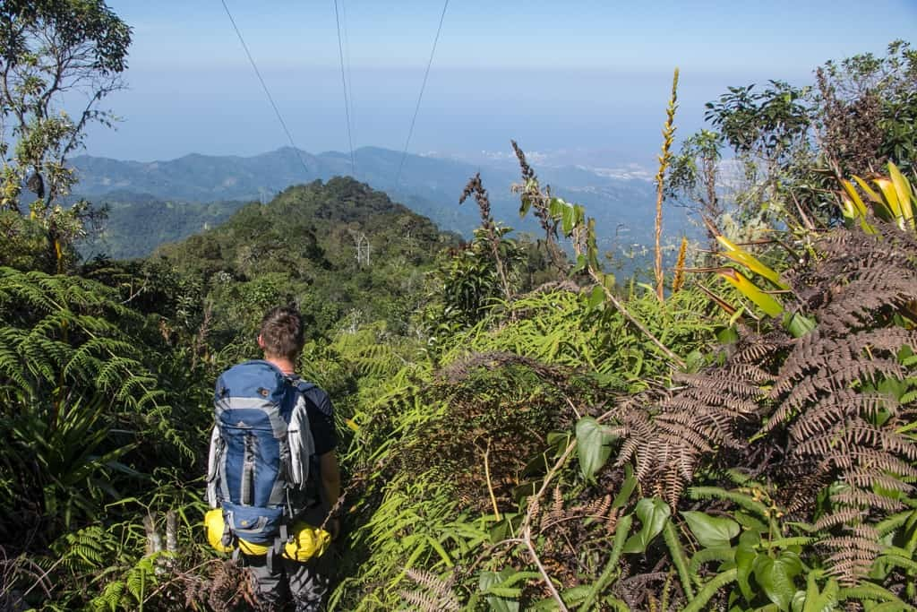 Man hiking in tropical forest