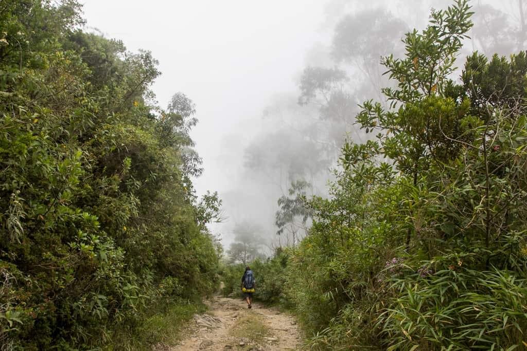 Guy hiking along jungle trail.