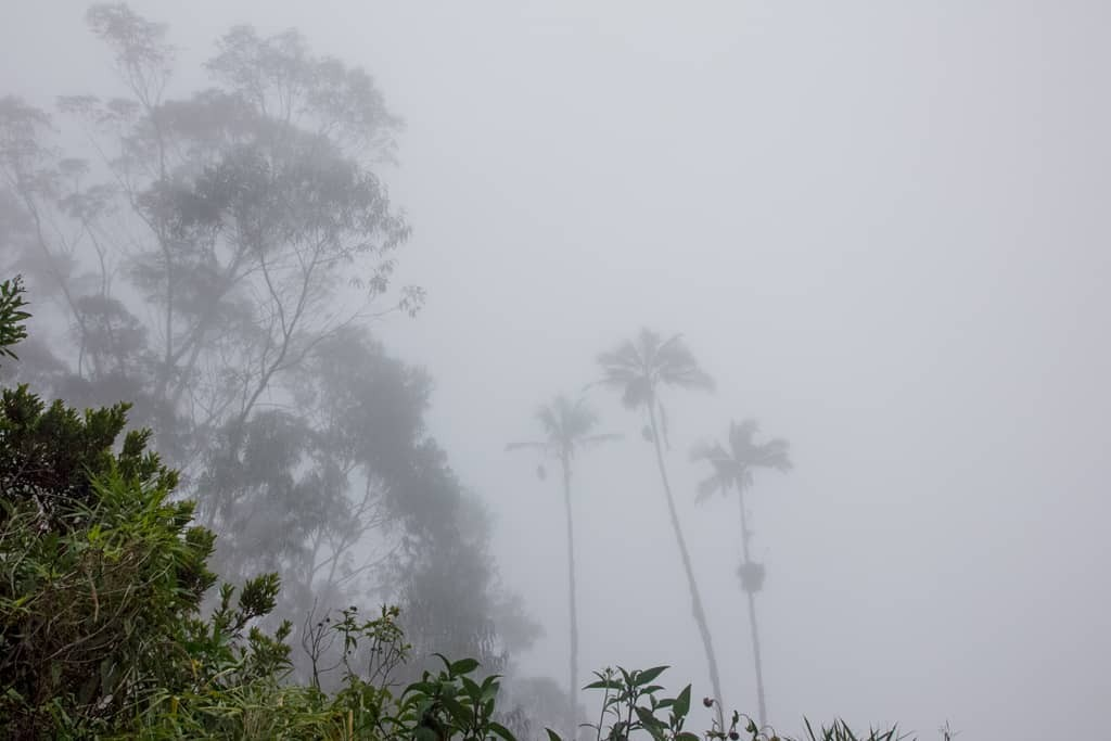 Misty palm trees
