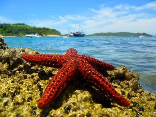 A Starfish On The Rocks in Búzios