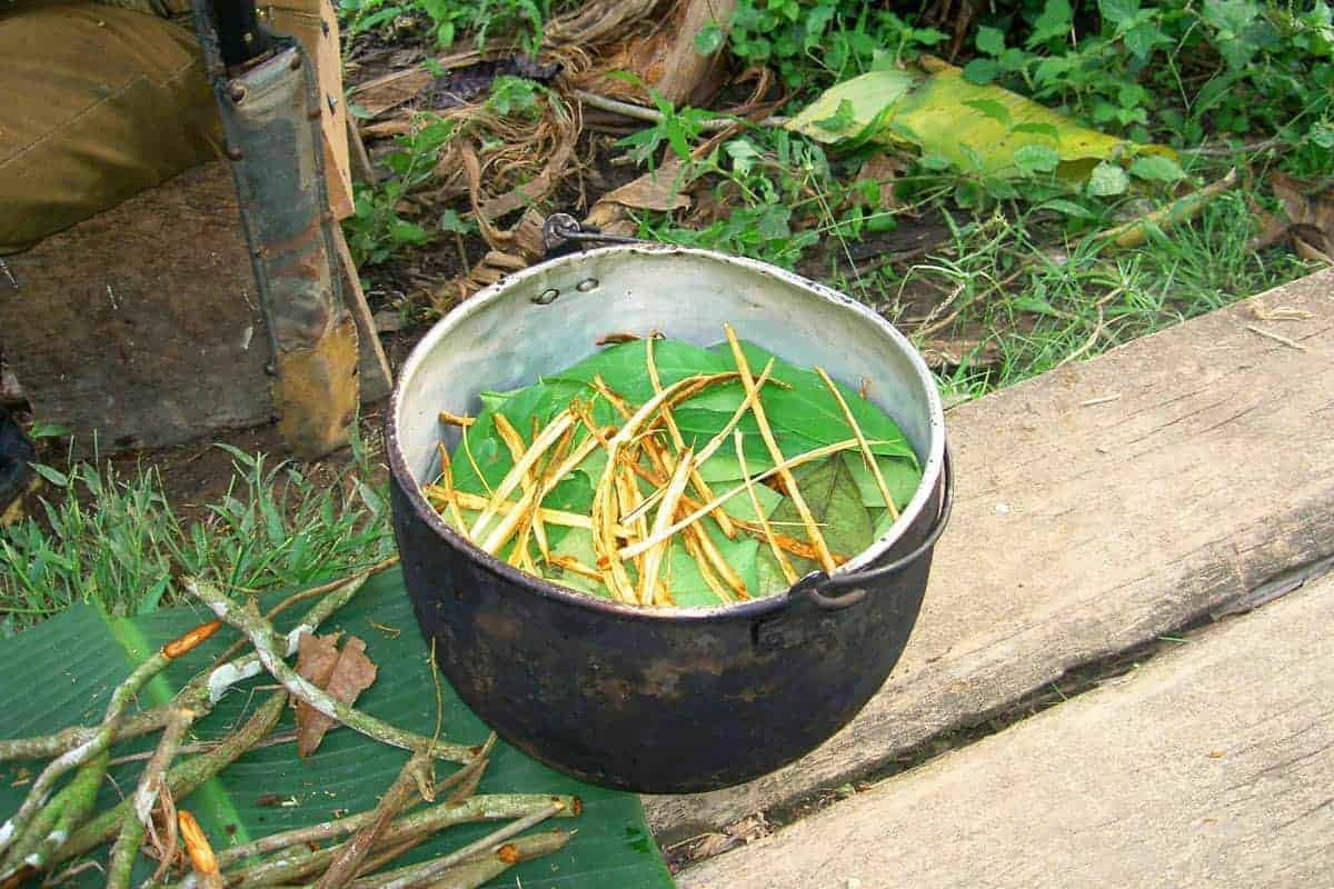 A Cup Of Ayahuasca