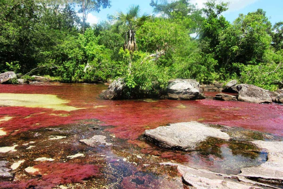 Red water in Caño Cristales