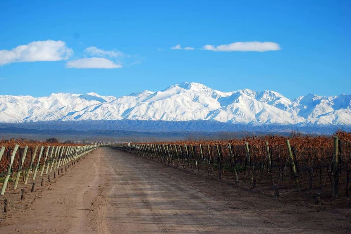 Vineyards and snowy mountains in Mendoza, Argentina