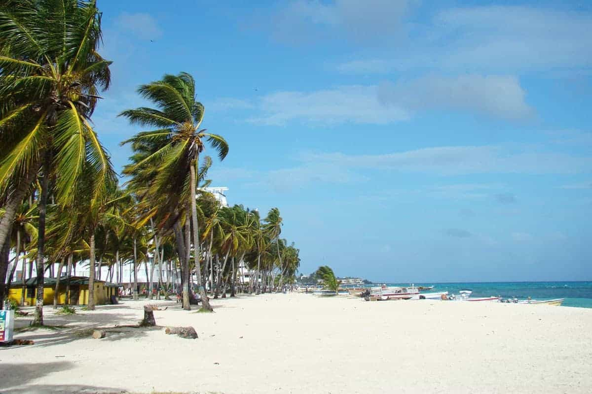 Palm trees blown in the window and a white beach on San Andres Island, Colombia