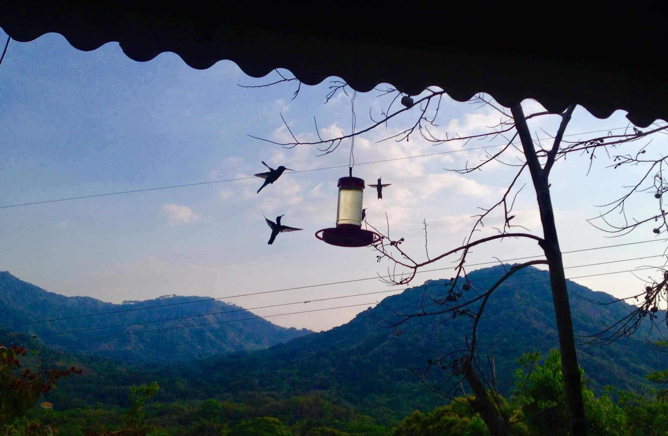 Hummingbirds on the terrace as Hotel Minca.