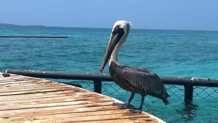 Islas Del Rosario, Colombia.