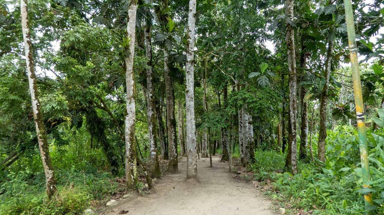 El Sendero Trail, Tena, Ecuador