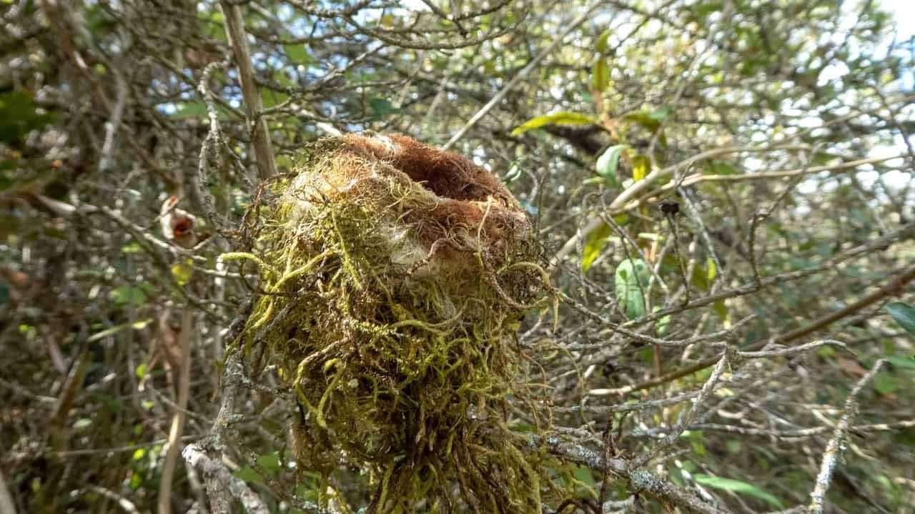 Even birds just love to hang around in the Cajas National Park, Cuenca, Ecuador