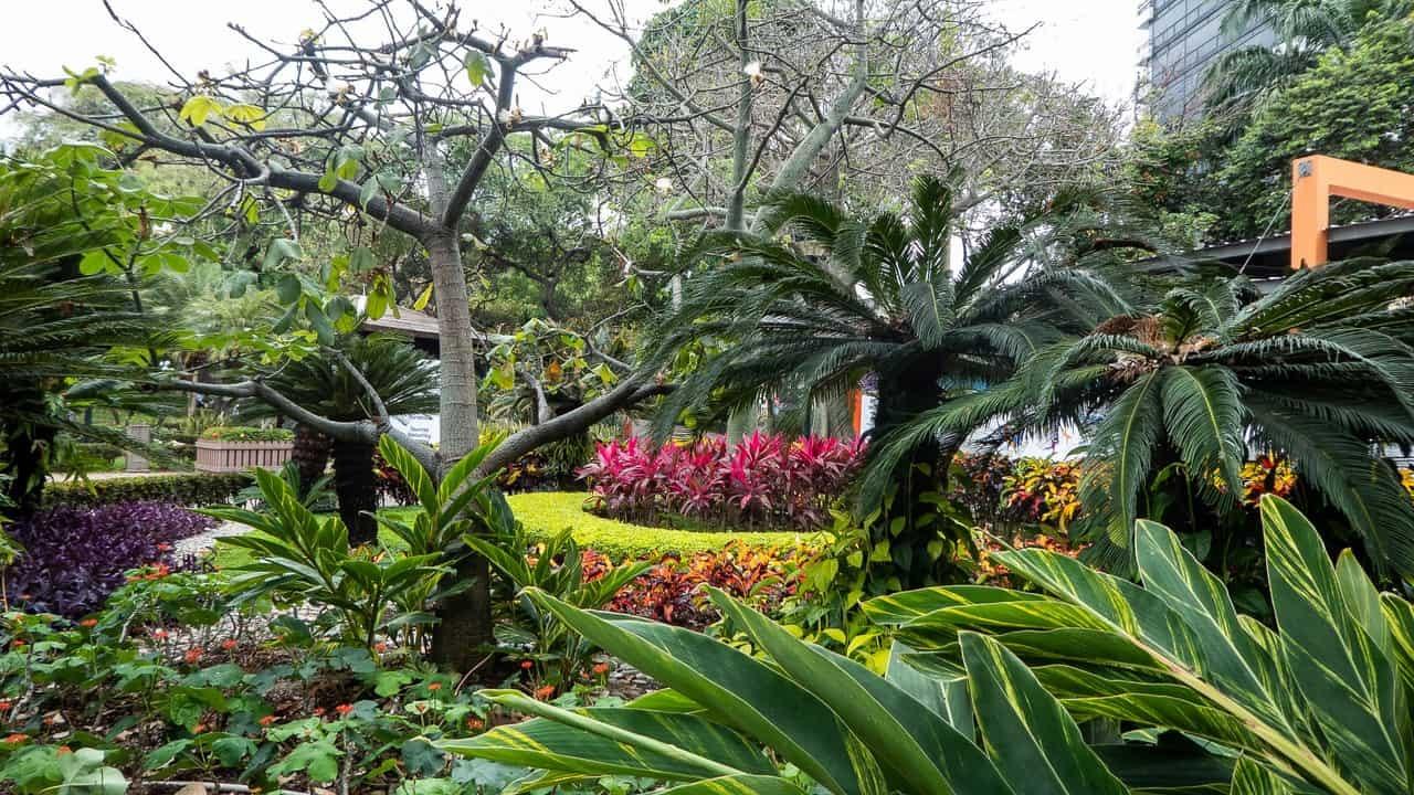 More greenery in Guayaquil, Ecuador.