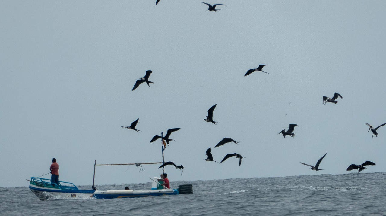 Birds flying over the ocean where boats are waiting for whales to show up in Puerto Lopez, Ecuador