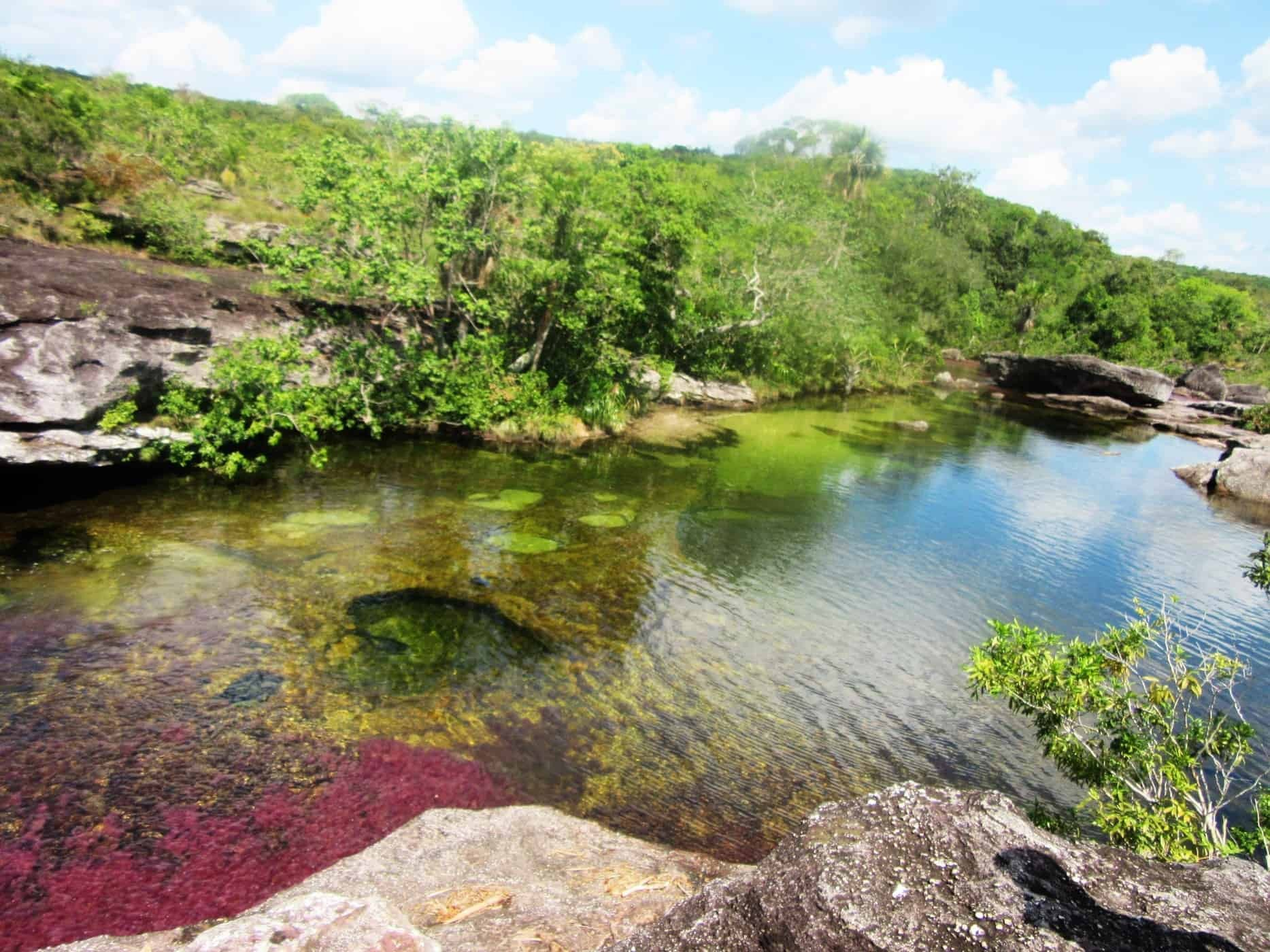 Visit Caño Cristales on a guided tour from La Macarena, Colombia.