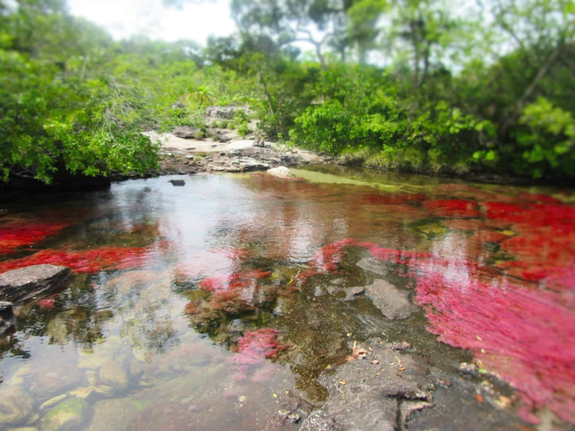 The most beautiful river in the world! Caño Cristales River, Colombia.