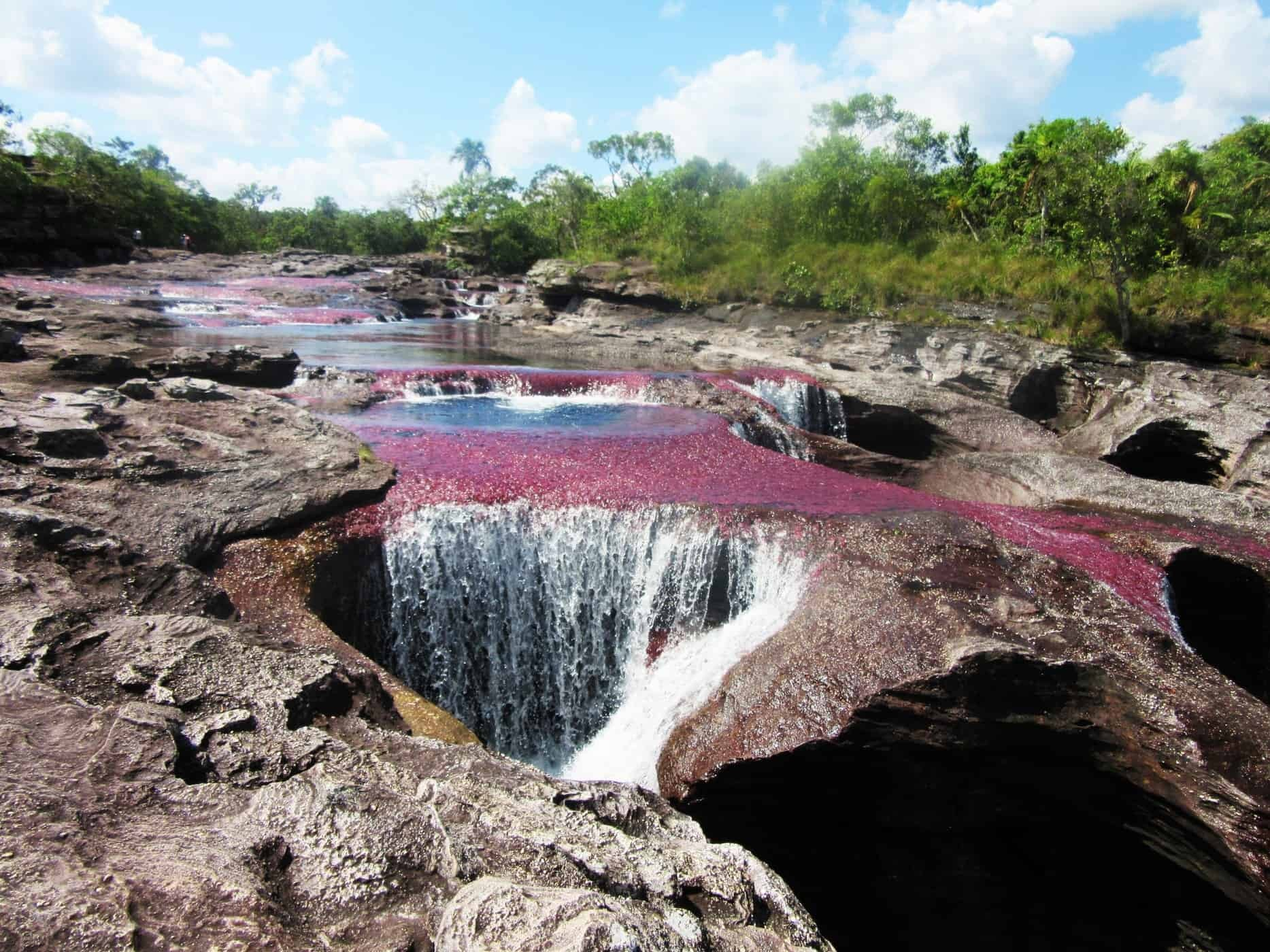 The river runs red - the amazing Caño Cristales River in Colombia.