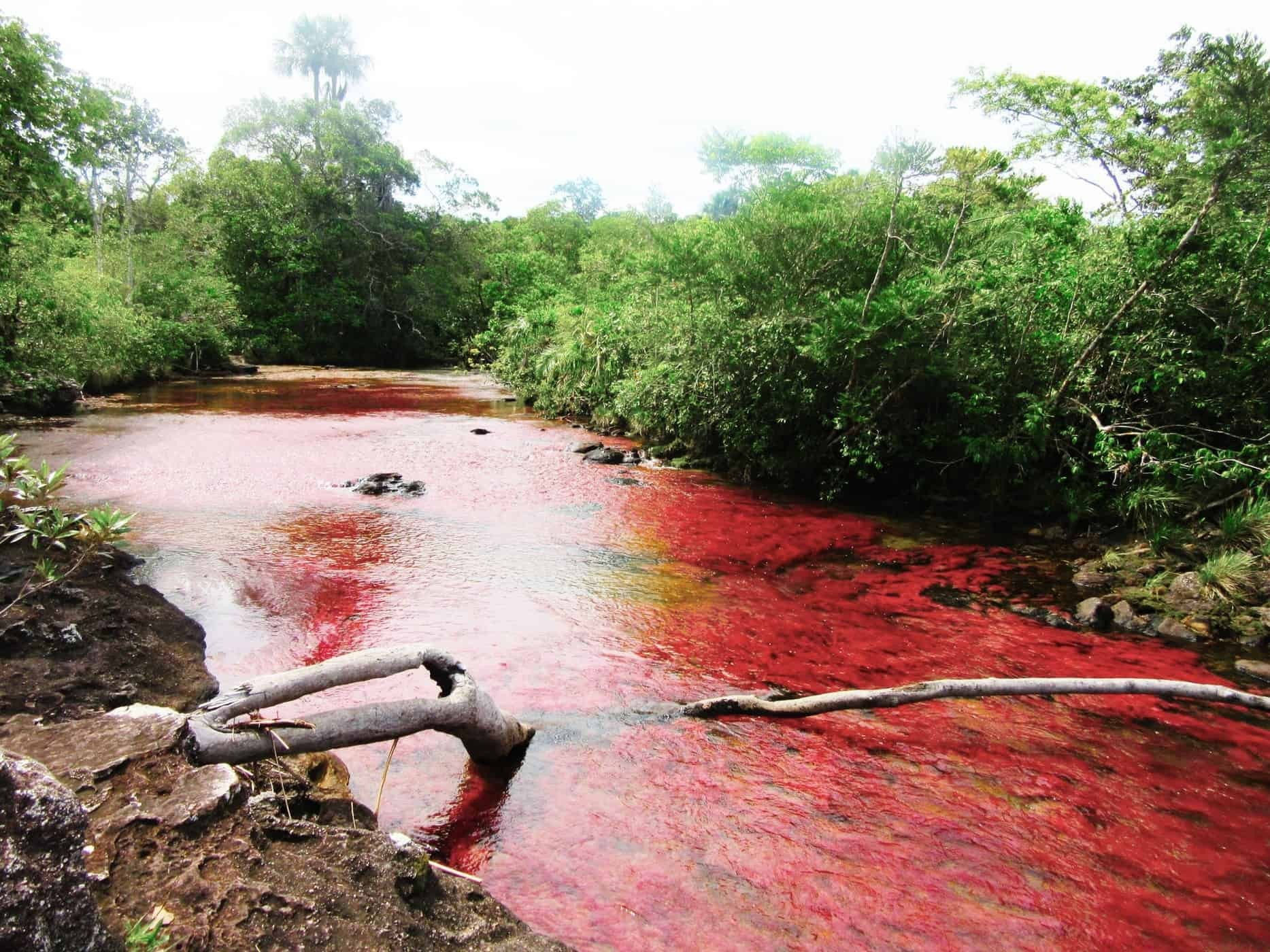 The rainy season is the best time to see Caño Cristales in all its glory.