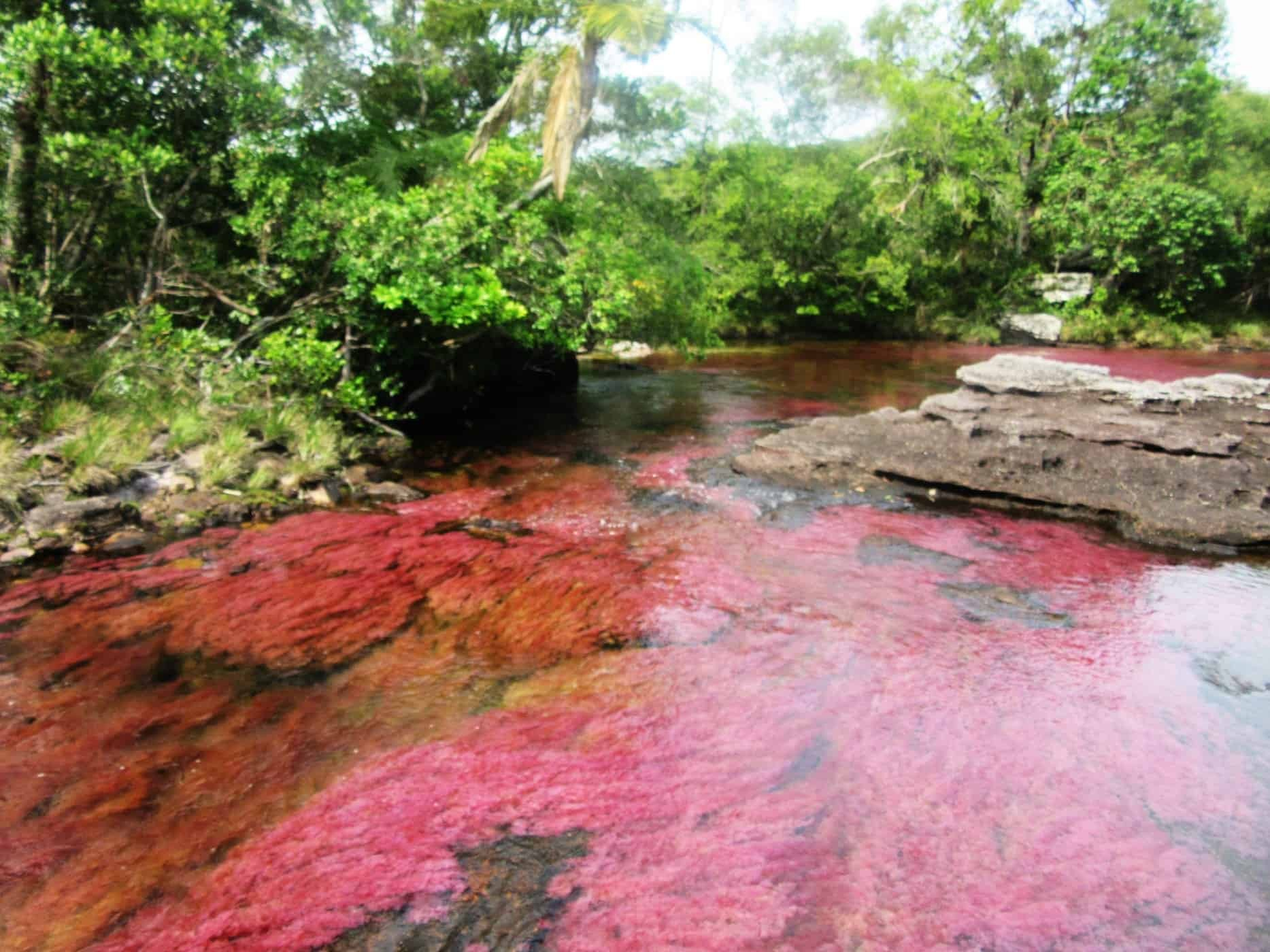 Experience amazing nature during your visit to Caño Cristales!