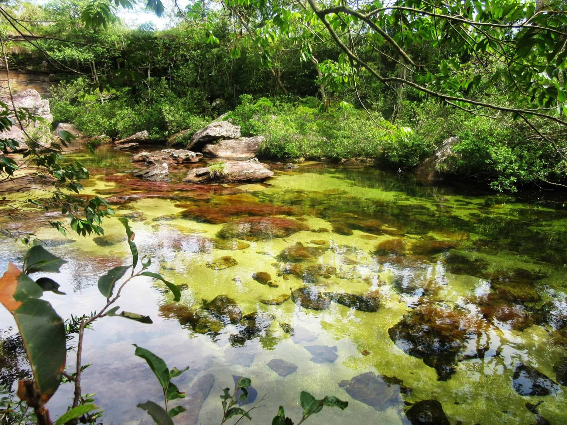 The water of the Caño Cristales is so clear you can see right through.