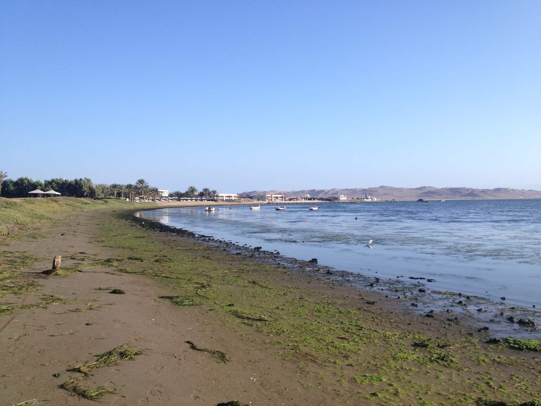 Seaweed on Paracas Beach Peru