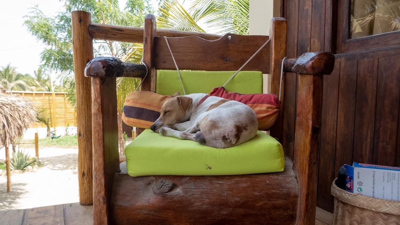 A dog sleeps on a chair at Casa Nomade