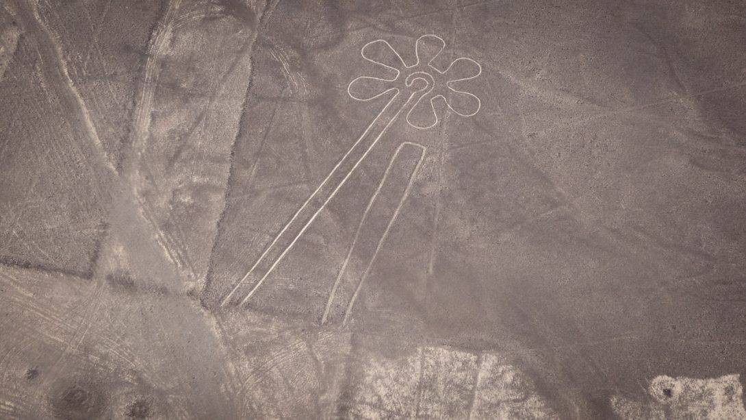 The Flower: Nasca Lines