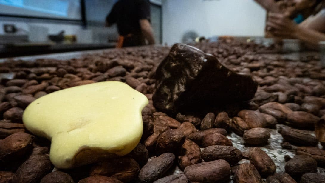 Some of the raw ingredients needed to make organic chocolate