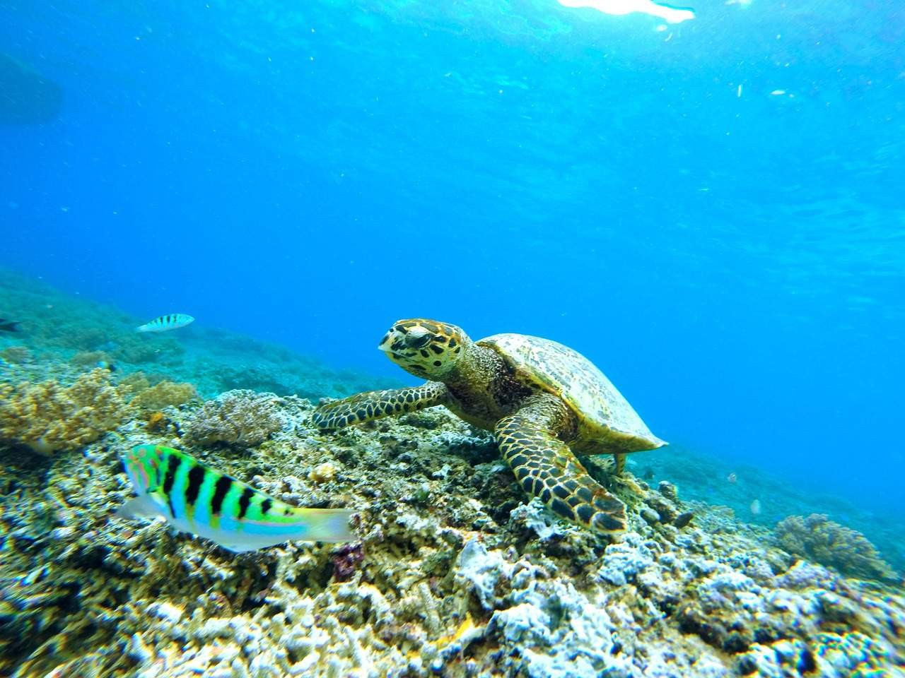 Turtle seen while diving