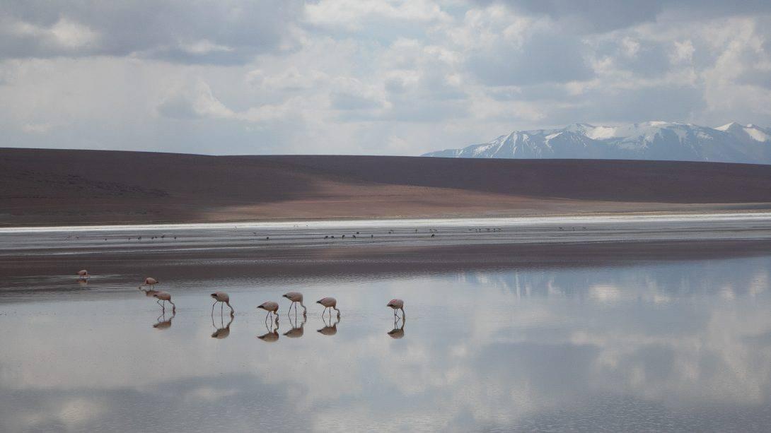 Flamingos in lagoon with mountains