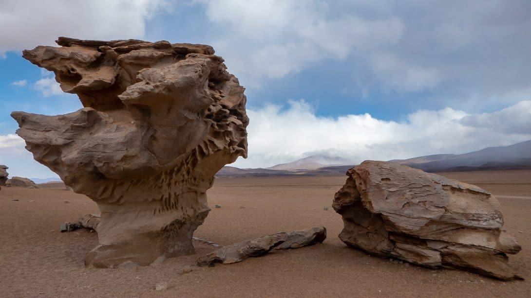 Bolivia stone tree