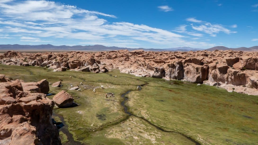 Grassy Landscape in the Valley of Rocks, Bolivia