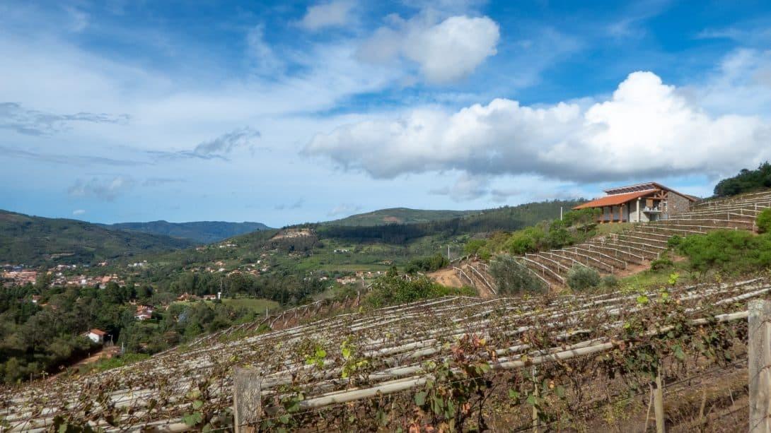 Vineyards in Samaipata