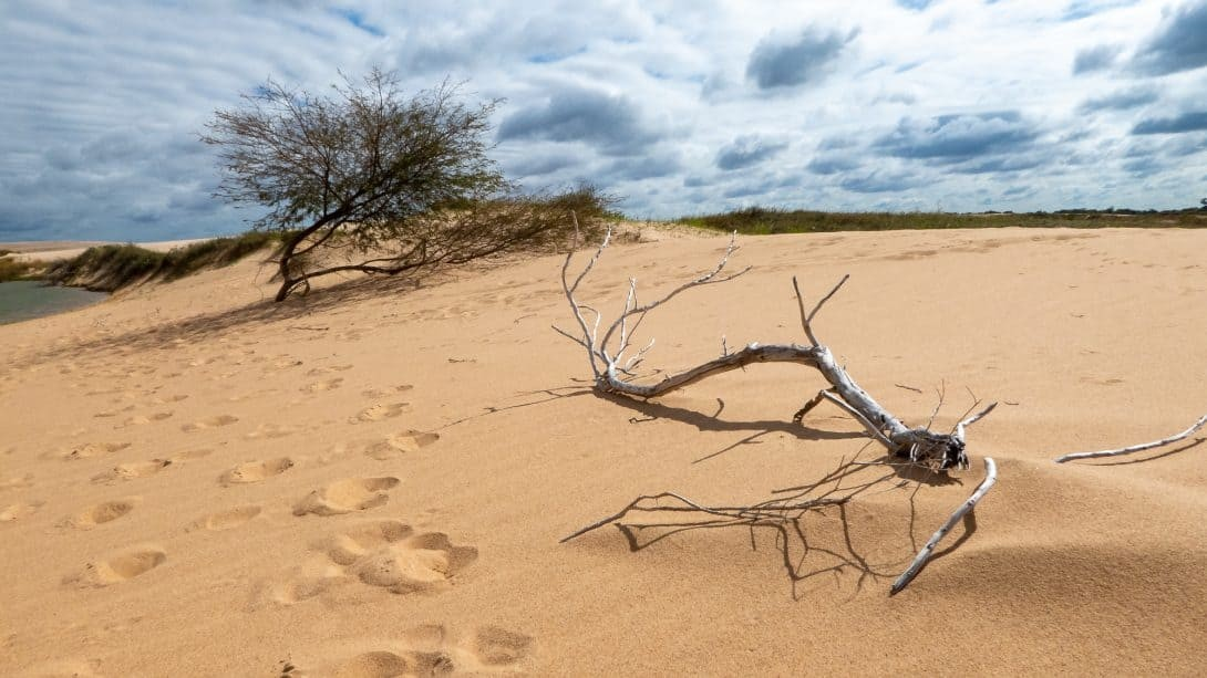 Branch and sand dunes at Lomas de Arena