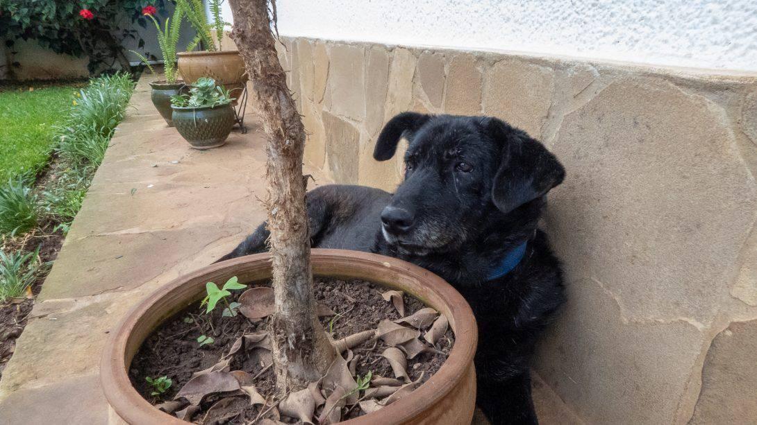 Dog next to plant pot at Casa Lynda