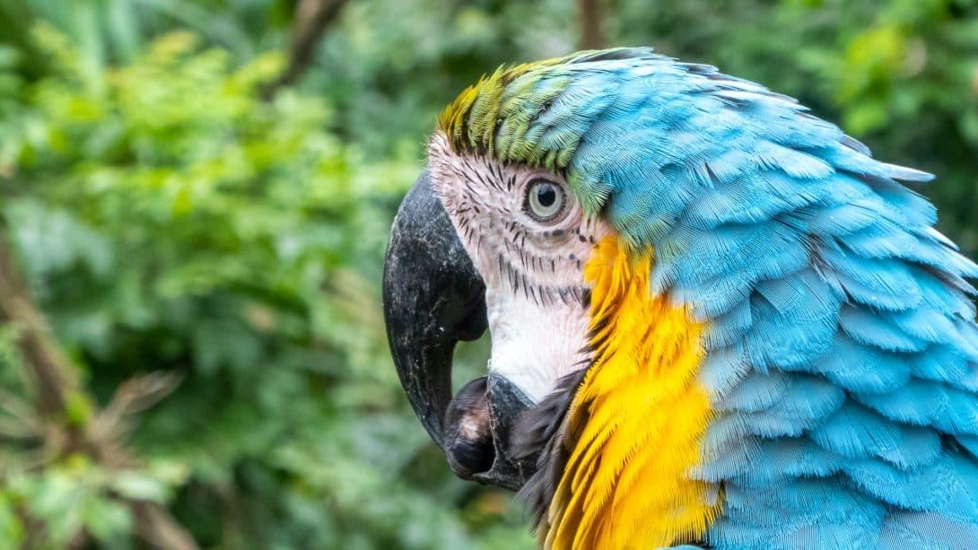 Parrot at Güembé Biocentre, Santa Cruz