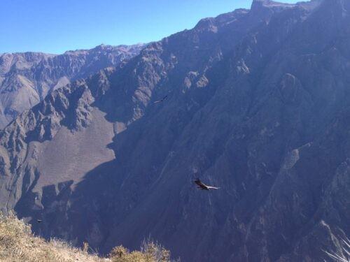 Colca Canyon view