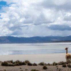 Salinas Salt Lagoon | 1 Day | from AREQUIPA, PERU