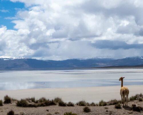 Salinas Salt Lagoon   1 Day   from AREQUIPA, PERU